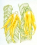 Ylang-Ylang eterično ulje 5 ml